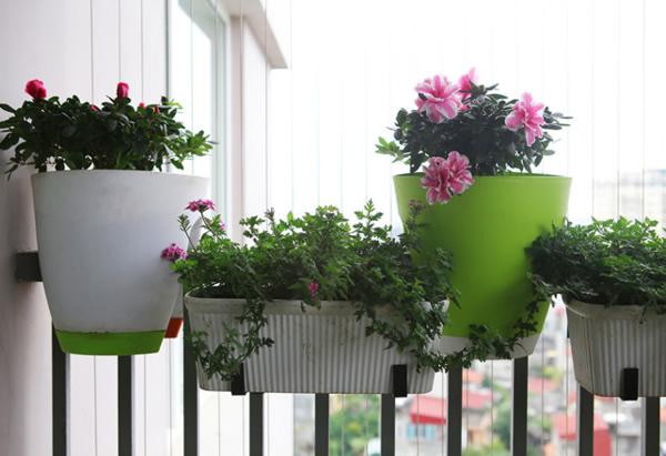Cây hoa trang trí ban công